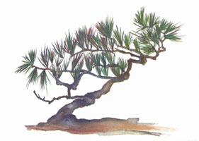 MC-741 BONZAI TREE