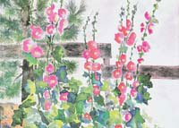 MC-646  HOLLYHOCKS
