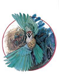 MC-672 MOTHER BIRD